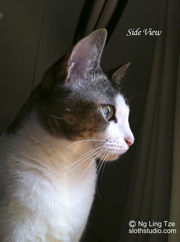 photo sample: side view photo of your pet